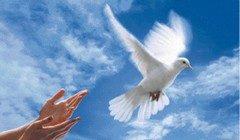 I Testimoni di Geova e il servizio civile: dal rifiuto al consenso, l'evoluzione di una coscienza consapevole